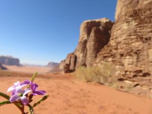 Wadi Rum Desert - photo by Kera