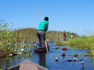 Paddling Mokoro's through the Delta