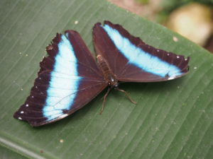 A butterfly at Nathaly