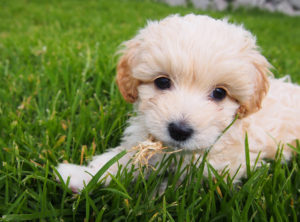 Cute puppy at the San Pablo Mirador