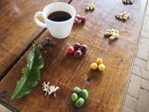 Coffee in various forms - coffee cherry through to fresh ground and brewed hot coffee