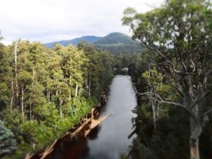 View of the Picton River from the cantilever viewing platform of the Tahune Airwalk