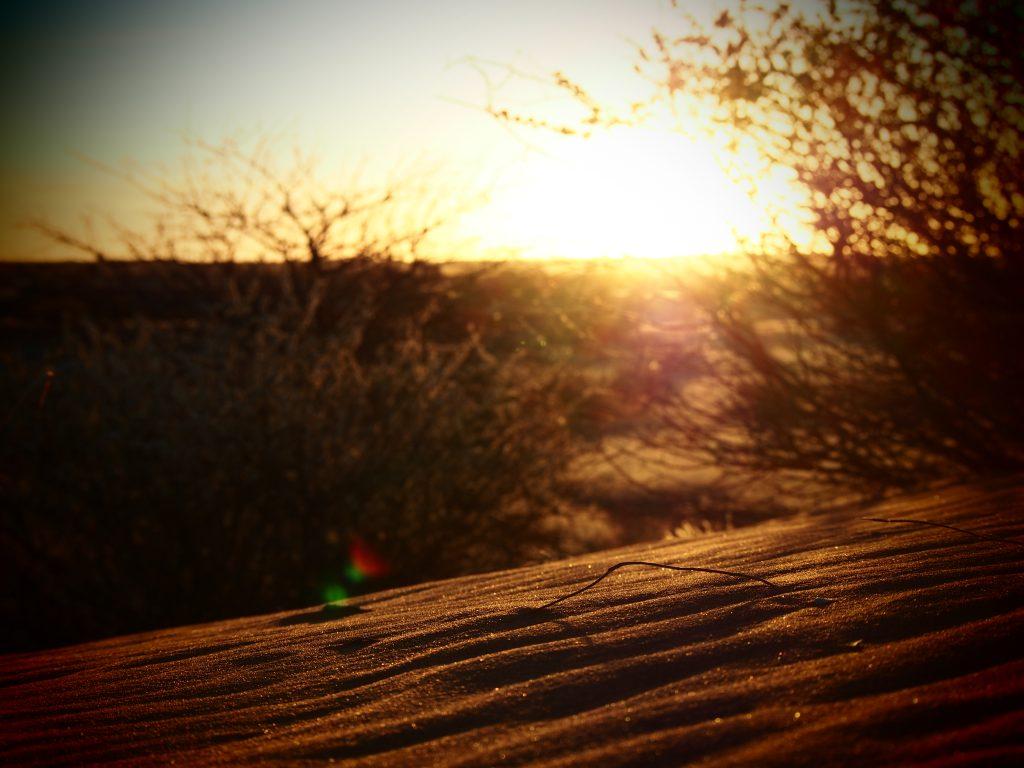 Sunset in the Kalahari Desert
