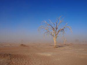 Dead trees of Sossusvlei seen through a sandstorm